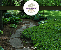 Olive Grove Landscaping Website Design